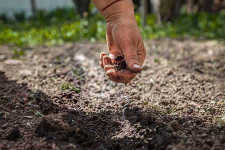 The hand of an elderly woman pours the earth on sowing. The concept of gardening, life on earth, style. Banque d'images - 96337543