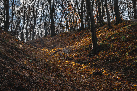 Autumn landscape in a park with yellow trees that grow tilted on hills and sun rays pass between them. Archivio Fotografico