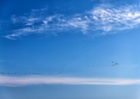 A flock of ducks flies over the sea in a clear blue sunny sky