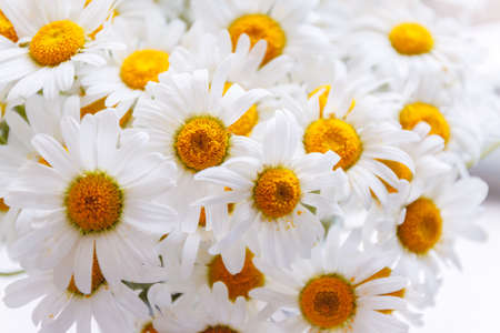 background of white field daisies with yellow centers Фото со стока