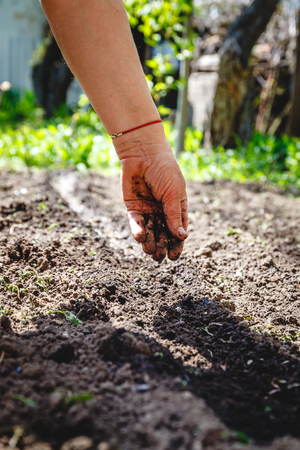 The hand of an elderly woman pours the earth on sowing. The concept of gardening, life on earth, style.