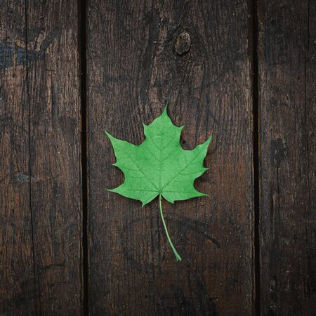 Green fallen maple leaf lies on a dark wooden old background. Save the space. View from above.