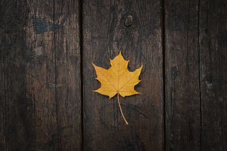 The yellow-orange fallen maple leaf lies on a dark wooden old background. Save the space. View from above.
