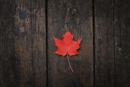 Red fallen maple leaf lies on a dark wooden old background. Save the space. View from above.