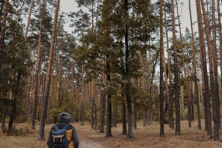 A young guy with a backpack in the hat, traveler, hipster standing in the woods, Hiking, Forest,Journey..