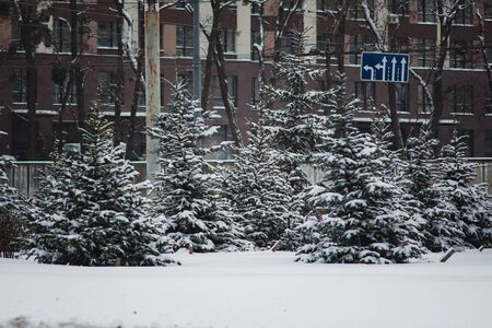 Christmas trees grow along a city road in front of a high-rise building. Snow landscape