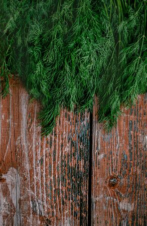 A bunch of young fresh juicy green dill on a rustic wooden old-time red background. Flat lay. Copy space Banque d'images