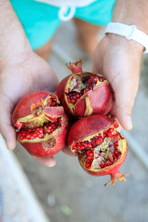in mens hands three ripe juicy pomegranate fruit. View from above.