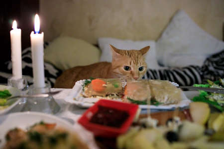 Fluffy ginger cat looks and sniffs food on the festive table