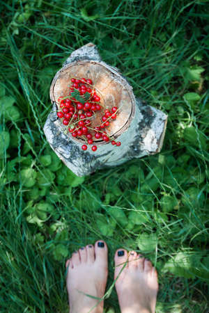 red juicy fresh red currant lies on a birch stump against a background of grass and female bare feet, top view, blur, close-up, copy space 免版税图像