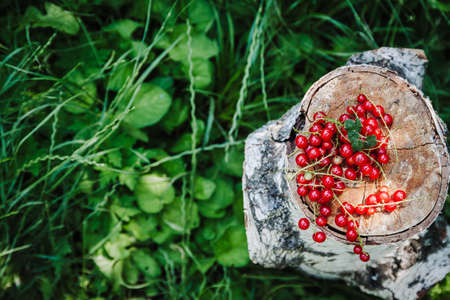 red juicy fresh red currant lies on a birch stump against a background of grass, top view, blur, close-up, copy space