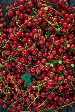 background of juicy red currants, close-up