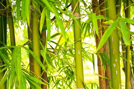 articulation: bamboo Stock Photo