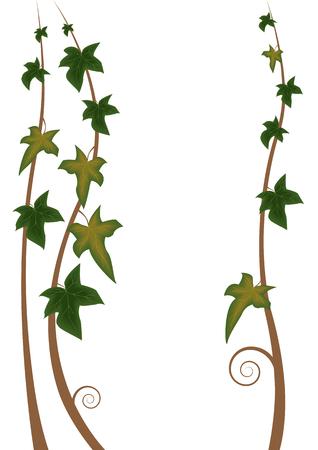 edera: illustration of the stalks of ivy Illustration