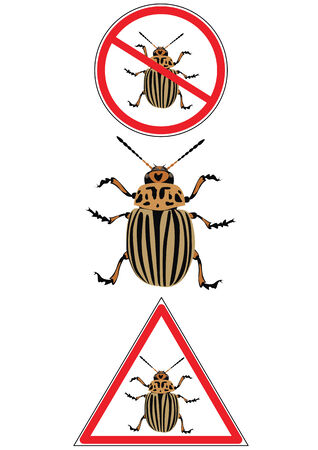 colorado potato beetle on the road signs Stock Vector - 3079183
