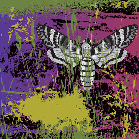banner with grass and deaths head hawk moth Vector