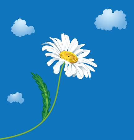 illustration of the ox-eye daisy against sky and clouds