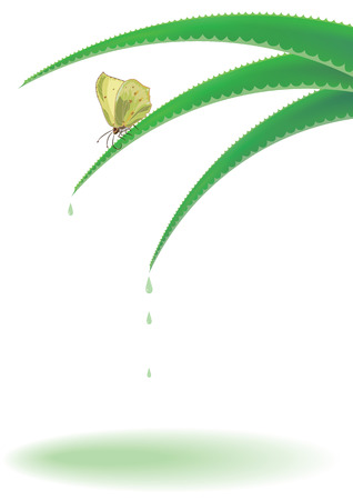 pharmaceutics:   background with aloe and butterfly Illustration