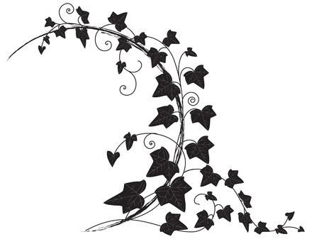 yedra: marco con la rama de hiedra  Vectores