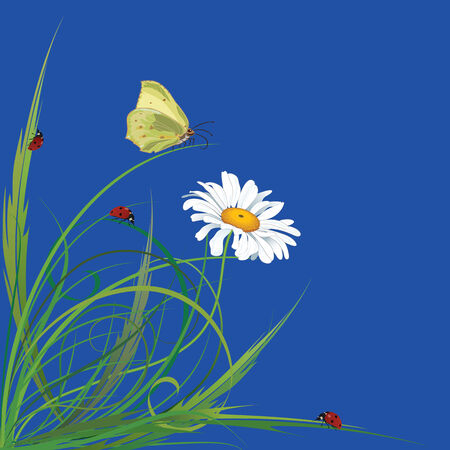 oxeye:  background with butterfly and ladybird for corner design Illustration