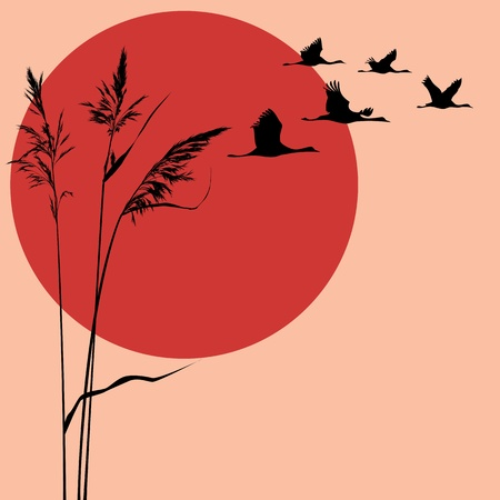 flock of cranes and sun Vector