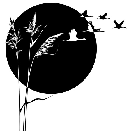 cranes and reed in black and white colors Vector