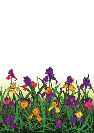 illustration of the flowerbed of irises  Vector