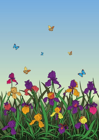 vector illustration of the flowerbed of irises  Vector