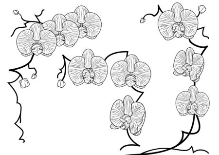 vector set of illustration of orchid in black and white colors Vector
