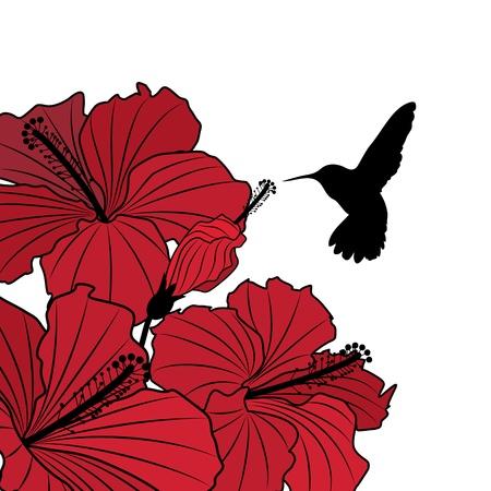 beautiful red hibiscus flower: Vector floral con flores de hibisco y colibr� Vectores
