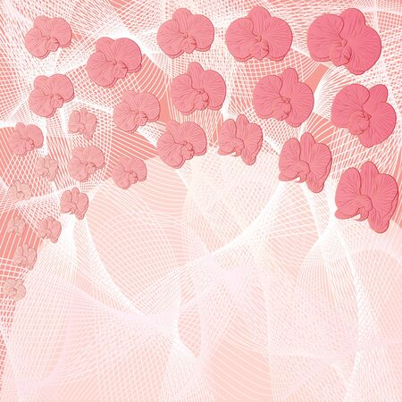 vector background with flowers of orchid in pink colors  Vector