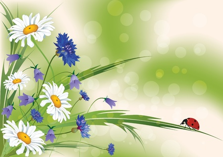 camomiles: vector floral background with ladybird
