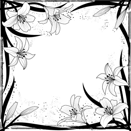 white lily: vector frame with lily in black and white colors