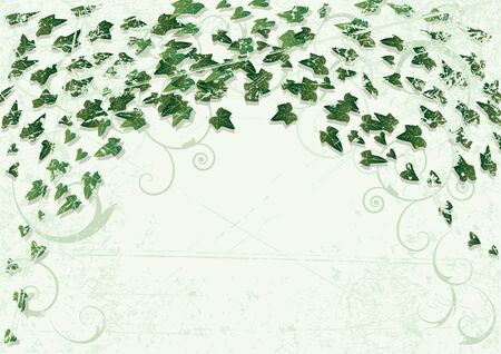Grunge background with leaves of  ivy Vector
