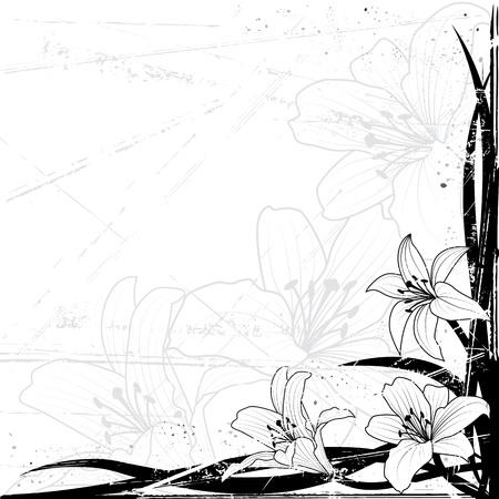 muguet fond blanc: lily en couleurs noir et blancs sur fond