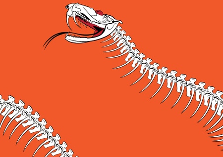 vector outline background with the venomous snake Vector