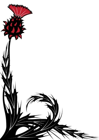 burdock: floral background with thistle in black, white and red colors
