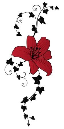 lilie: Lilie und Efeu, vector floral illustration
