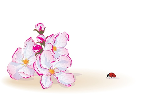 background with flowers of apple and ladybird Stock Vector - 12485593