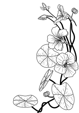art noveau: illustration of the nasturtium in black and white colors