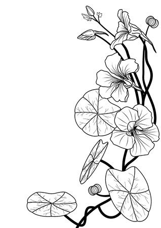 art nouveau: illustrazione del nasturzio nei colori bianco e nero