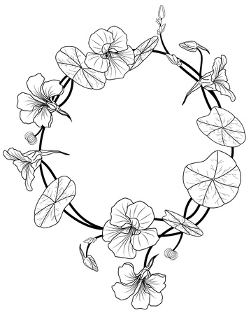 nasturtium: Frame of the nasturtium in black and white colors Illustration