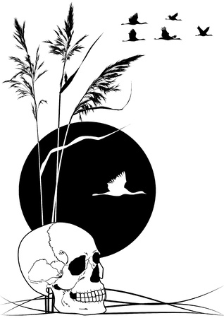 flocks: background with skull, cranes and reed in black and white colors Illustration