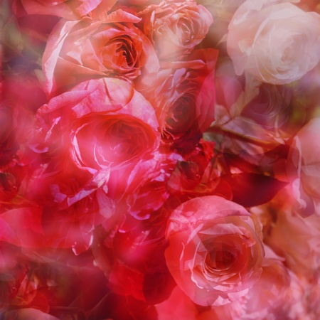 Abstract roses background in red and pink colors photo