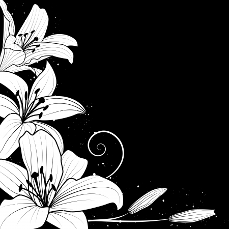 white: illustration with flowers of lily in black and white colors