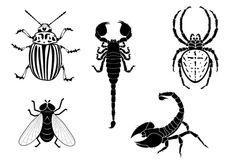 set of  illustration of potato beetle, fly, scorpion and spider Vector