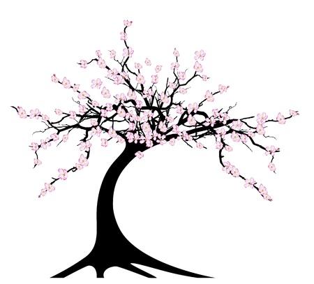 flor de sakura: ilustraci�n del cerezo en blanco Vectores