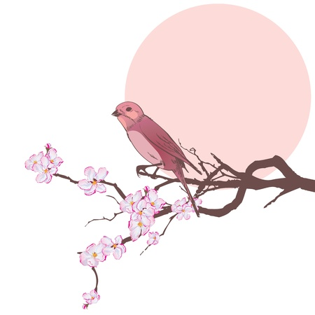 vector illustration of bird on the branch of cherry tree   EPS 10  Vector