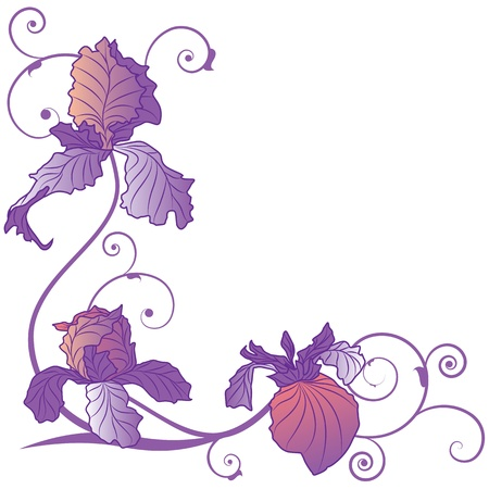 iris: vector background with flowers of irises for corner design