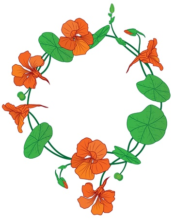 vector frame of the nasturtium isolated on white Vector